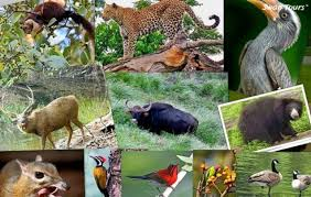 Essay on Wildlife and Conservation